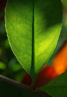 Leaf, Nature, Green, The Leaves, Hwalyeob, Abstract