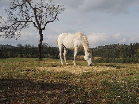 Horse, Fall, Autumn, Animal, Equine, Landscape, Farm