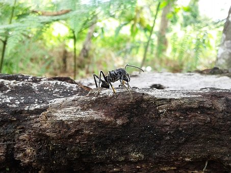 Ant, Insect, Animal, Tropical, Wild, Tree, Cologne