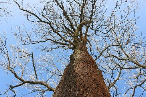 Tree, Winter, Snow, Log, Nature, Sky, Green, Bark