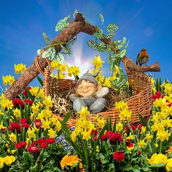 Emotions, Nature, Flowers, Spring, Bloom, Dwarf, Figure