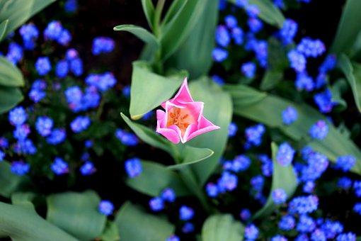 Bloom, Blooming, Blossom, Botanic, Botanical, Bright