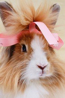 Rabbit, Ribbon, Bunny, Cute, Portrait, Lionhead