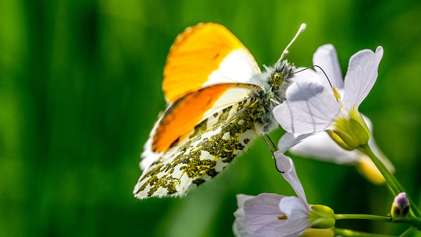 Butterfly, Plant, Insect, Nature, Flower, Color, Animal