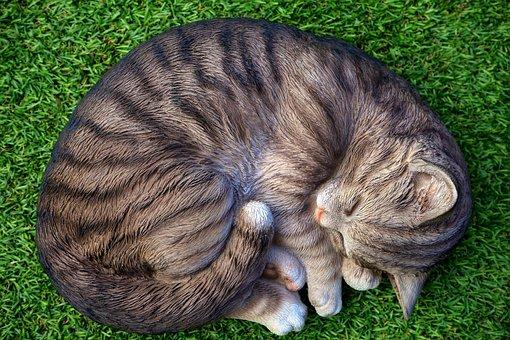Animal, Cat, Cute, Domestic, Feline, Fluffy, Fur, Furry