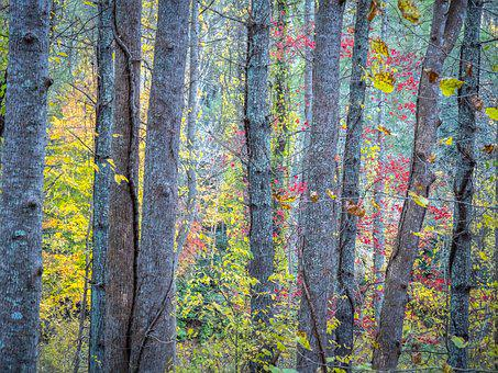Trees, Colorful, Fall, Autumn, Forest, Leaf, Branch