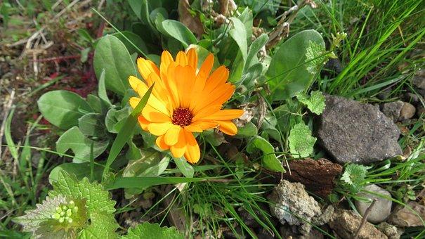 Flower, Plant, Floral, Leaf, Blossom, Natural, Color