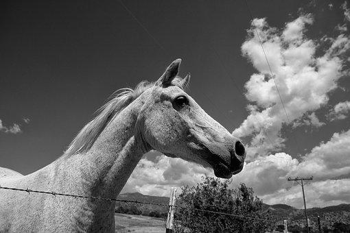 Horse, Clouds, Pony, Black And White Photography, Sky