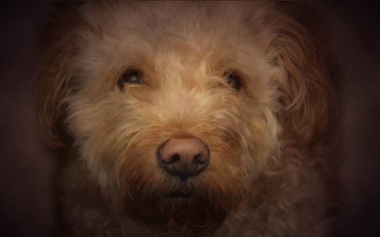 Dog, Beautiful, Look