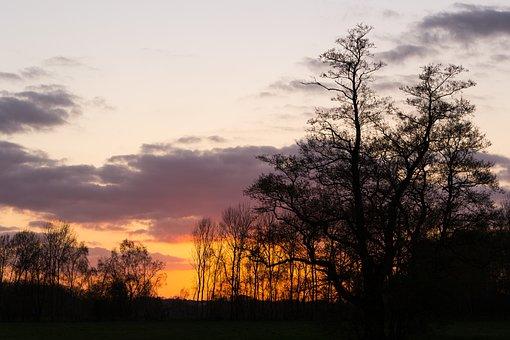 Sunset, Trees, Shadow, Silhouette, Nature, Evening Sun