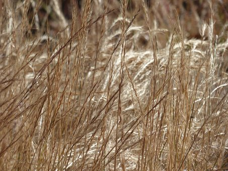Weeds, Texture, Plant, Nature, Natural, Pattern, Grass