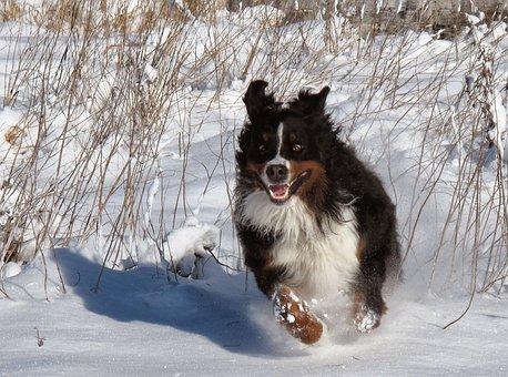 Dog, Snow, Winter, Pets, Happy, Race, Play