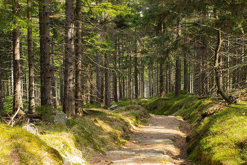 Forest, Forest Solitude, Hiking, Poland