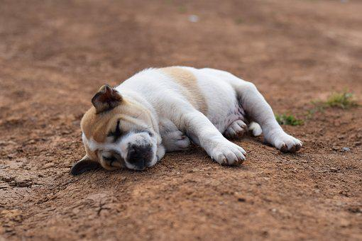 Animals, Dog, Sleep, Comfortable, Soil, Puppy, Lonely