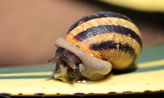 Snail, Shell, Close, Nature, Reptile, Spiral