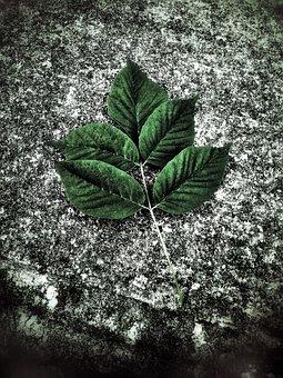 Leaf, Street, Nature, Green