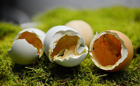 Eggshell, Hatched, Broken Up, Shell, Hatch, Chickens