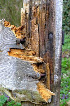 Wood, Fence, Nails, Environment, Forest, Wooden, Board