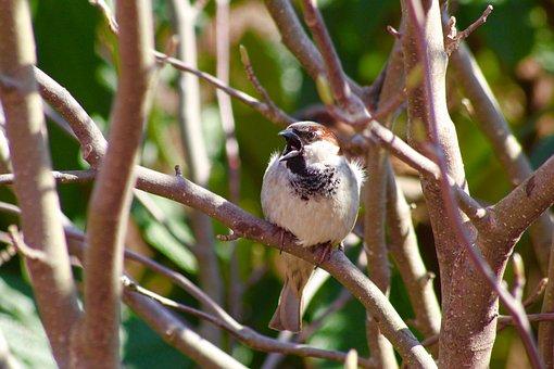 Bird, Little, Happy, Nature, Cute, Wildlife, Animal