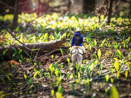 Horse, Forest, Light, Bear's Garlic, Nature, Animal
