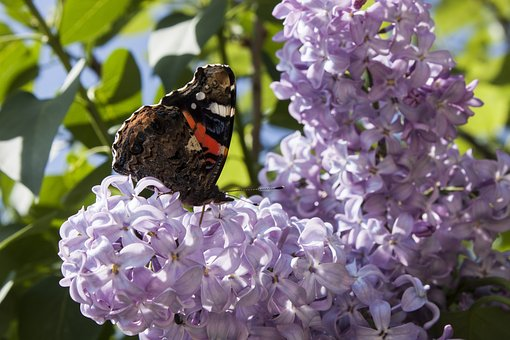Butterfly, Spring, Nature, Flowers, Insects