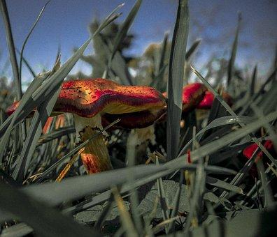 Mushroom, Meadow, Plant, Nature