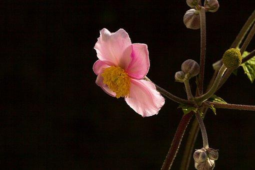 Flower, Soft Colors, Blossom, Bloom, Nature, Pink
