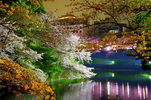 Chidorigafuchi, Cherry Blossoms, Spring, Japan, Castle