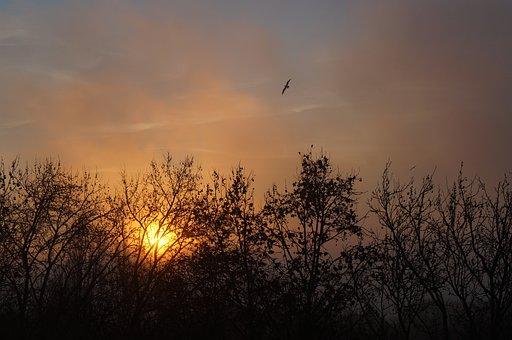 Sunset, Sky, Timber