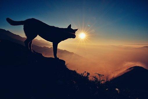 The Sun, Light, Fog, Mountain High, Scenery, Dog