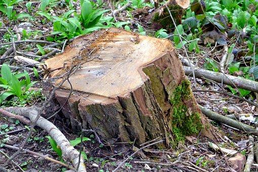 Tree, Trunk, Nature, Sawn, Log, Cut, Deforestation