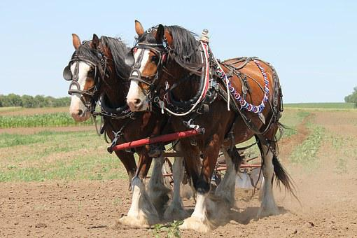 Clydesdale, Plowing, Horse, Agriculture, Team, Work