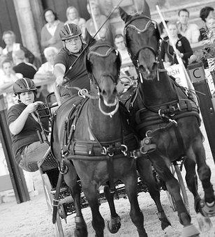 Horse, Horses, Equestrian, Animals, Animal, Horsehead