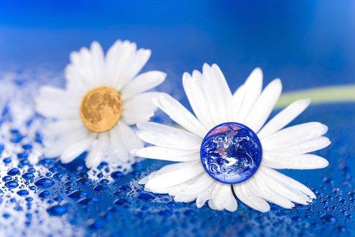 Earth, Moon, Flower, Daisy, Blue, Water, Droplet