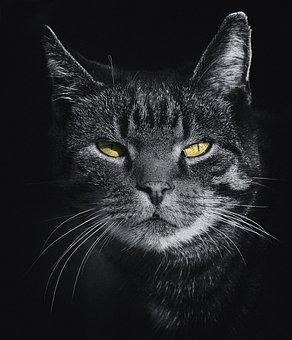 Cat, Mieze, Adidas, Grey, Mackerel, Animal Portrait