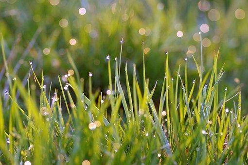 Grass, Blades, Rosa, Drops, Water, Morning, Single