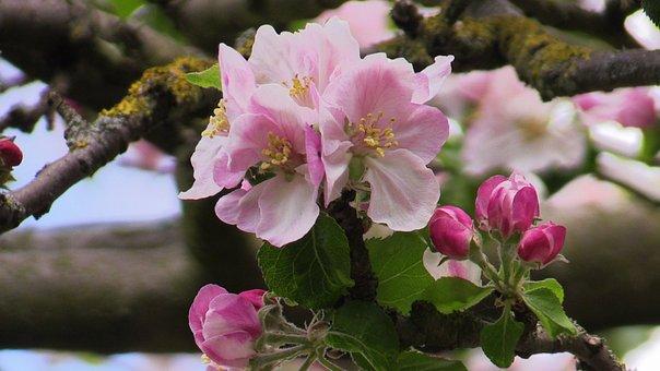 Flower, Spring, Nature, Plant, April, Blossom