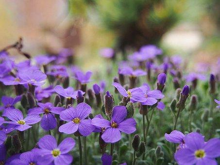 Garden, Spring, Nature, Plant, Flowers, Violet
