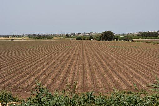 Field, Plant, Nature, Summer, Green, Grass, Outdoors
