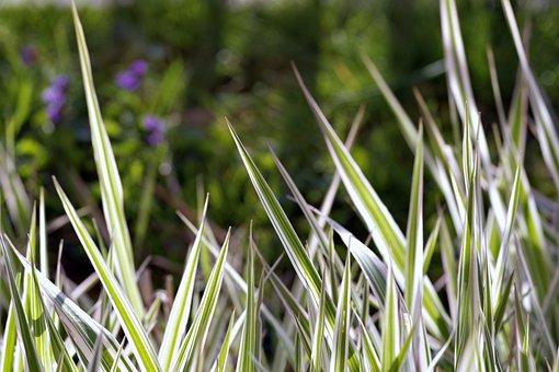 Grass, Tiger, Strips, Green, Fancy, Garden, Blades