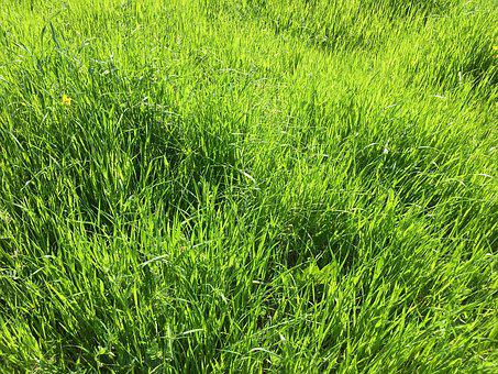 Spring, Green, Energy, Meadow, Grass