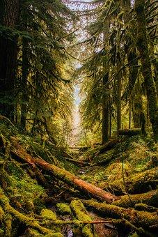 Oregon, Landscape, Forest, Trees, Woods, Nature