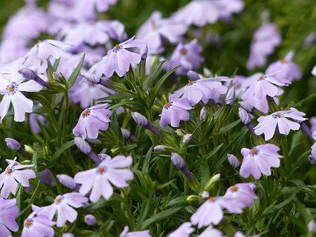 Spring Flowers, Meadow, Nature, Violet, Crocus, Green