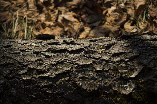 Tree, Texture, Winter, Woods, Nature, Old, Pattern, Log