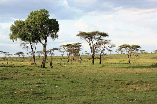 Kenya, Savannah, Safari