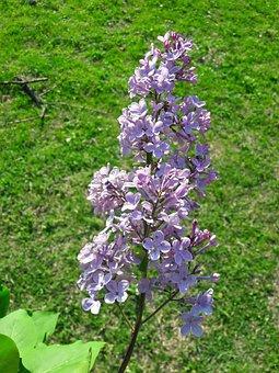 Flowers, Spring, Green, Beautiful, Nature, Nice Photo