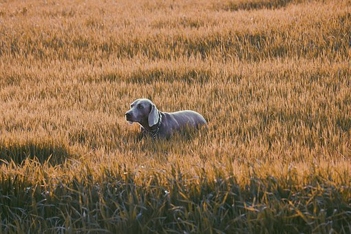 Dog, Grass, Pet, Animal, Cute, Puppy, Canine, Summer