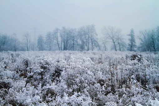 Winter, Snow, Ice, Hoar Frost, Cold, Morning, Sunrise