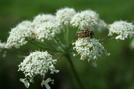 Wasp, Flower, Summer, Insects, Macro