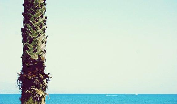 Palm, Palm Tree, Water, Palm Trees, Tree, Tropical